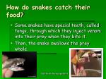 how do snakes catch their food2