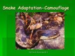 snake adaptation camouflage