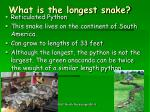 what is the longest snake