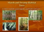 marsh and swamp habitat trees