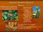 marsh swamp habitat plants