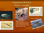 mountain habitat water animals