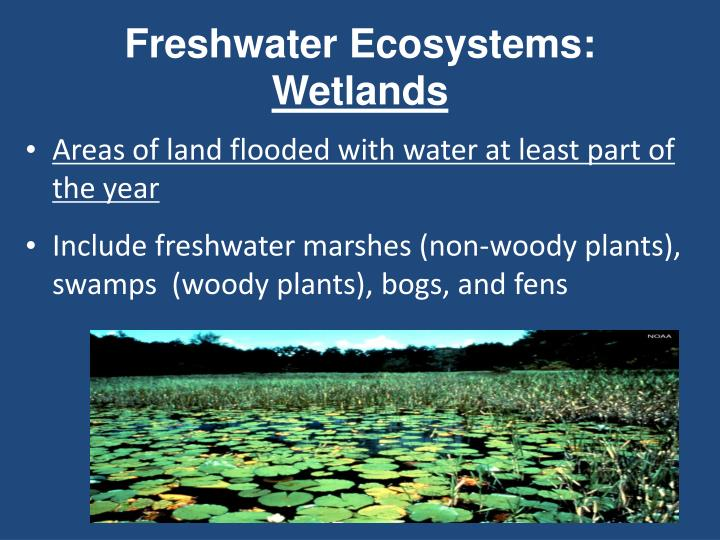 the importance of wetlands to the ecosystem Resource oriented and ecosystem services will also become a must in the future • constructed wetlands (cw) can play an important role in sustainable sanitation.