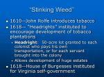 stinking weed