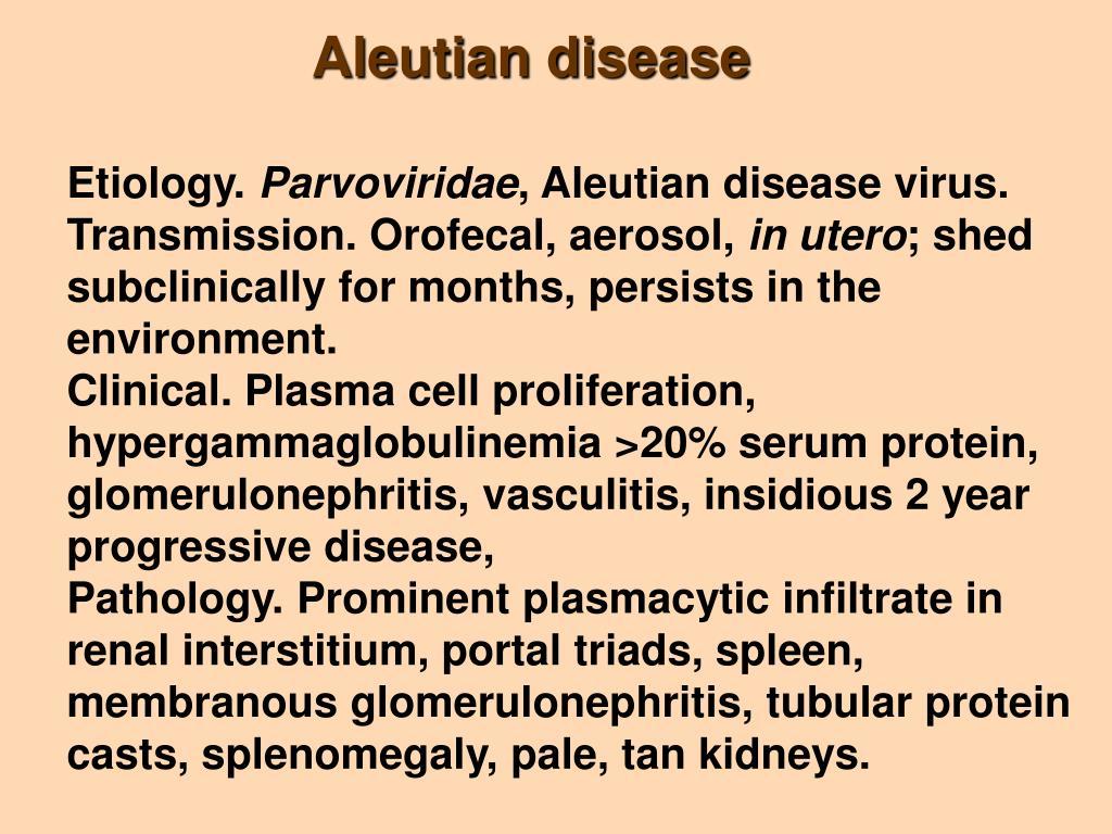 Aleutian disease
