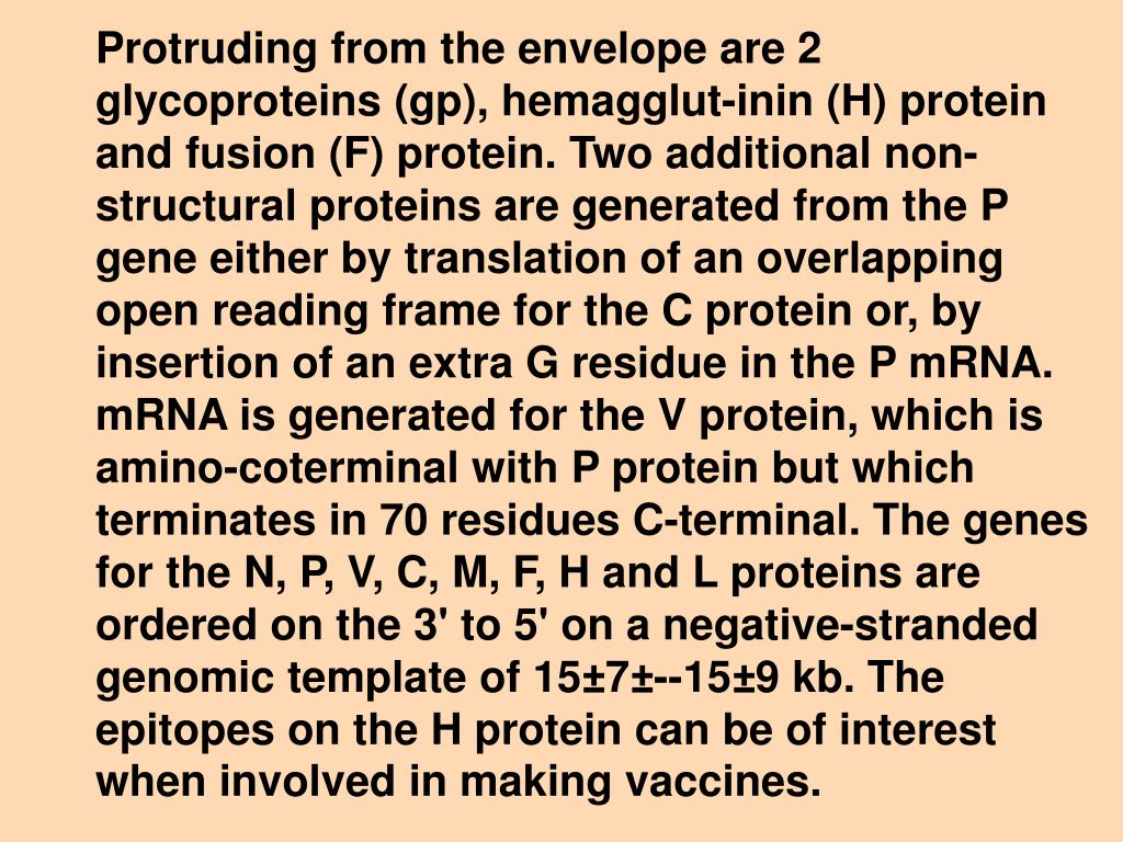 Protruding from the envelope are 2 glycoproteins (gp), hemagglut-inin (H) protein and fusion (F) protein. Two additional non-structural proteins are generated from the P gene either by translation of an overlapping open reading frame for the C protein or, by insertion of an extra G residue in the P mRNA. mRNA is generated for the V protein, which is amino-coterminal with P protein but which terminates in 70 residues C-terminal. The genes for the N, P, V, C, M, F, H and L proteins are ordered on the 3' to 5' on a negative-stranded genomic template of 15±7±--15±9 kb. The epitopes on the H protein can be of interest when involved in making vaccines.