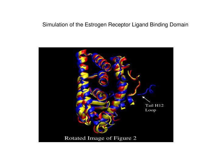 Simulation of the Estrogen Receptor Ligand Binding Domain
