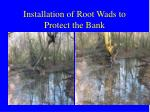installation of root wads to protect the bank