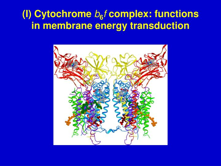 I cytochrome b 6 f complex functions in membrane energy transduction
