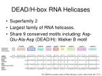 dead h box rna helicases
