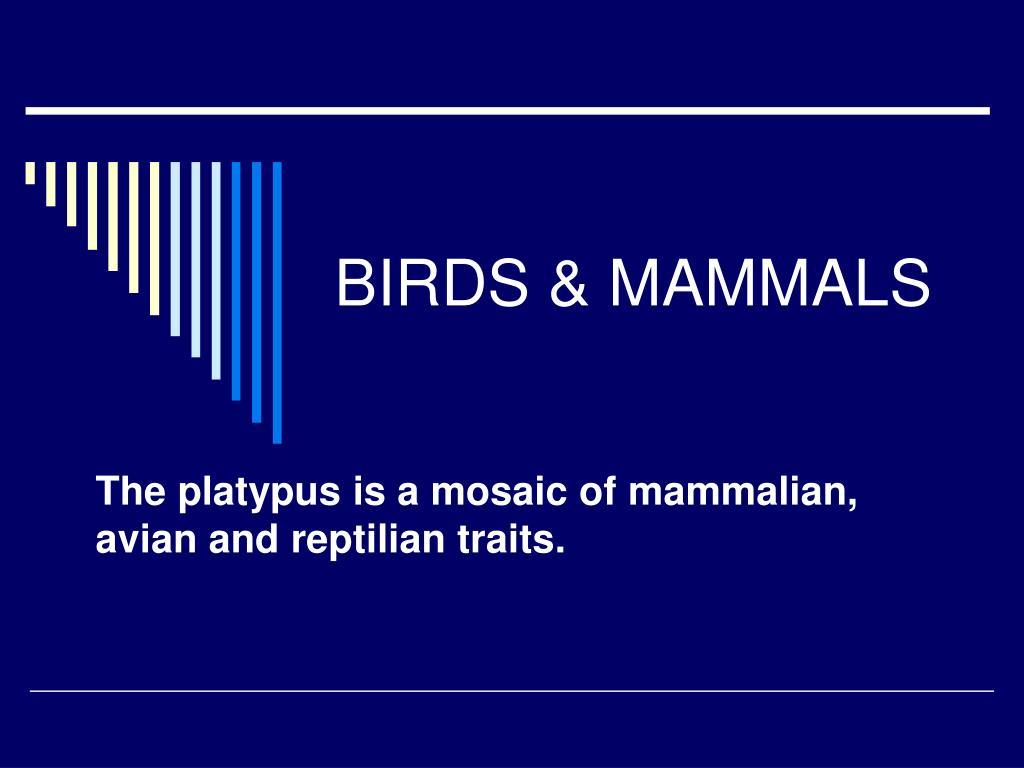 birds mammals l.