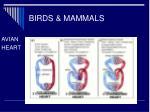 birds mammals13