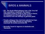 birds mammals2