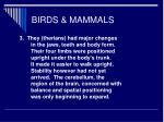 birds mammals22