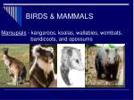 birds mammals26