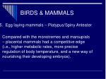 birds mammals28