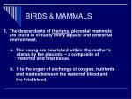 birds mammals32