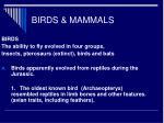 birds mammals4