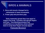 birds mammals46