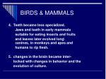 birds mammals48
