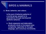 birds mammals49