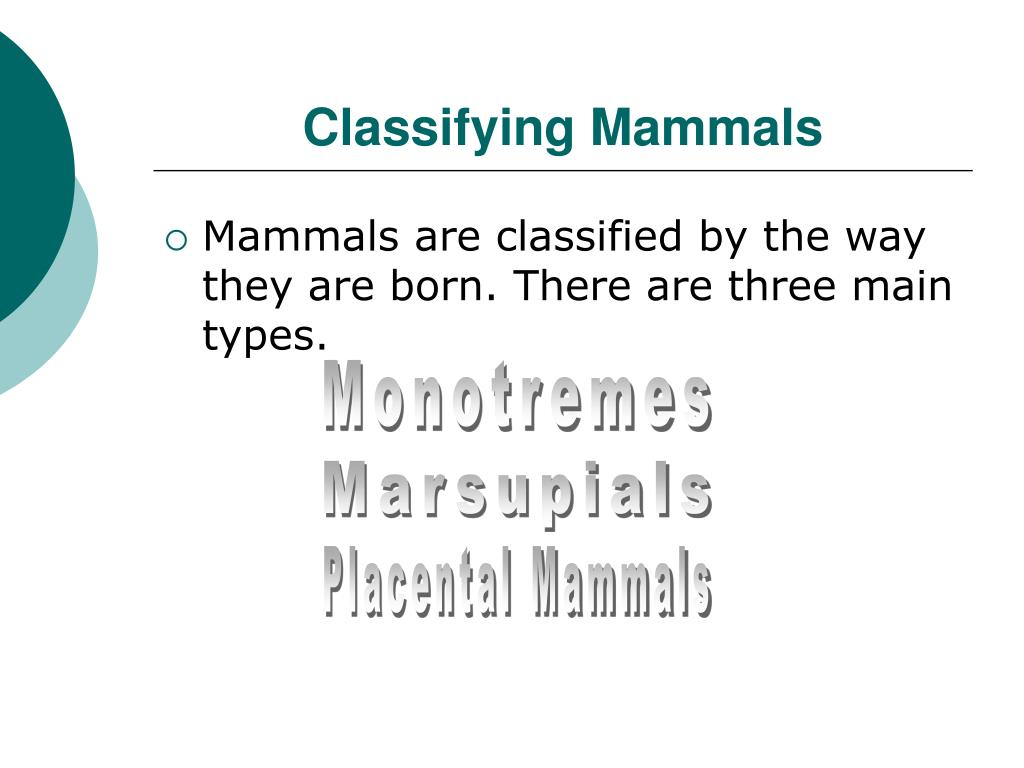 Classifying Mammals