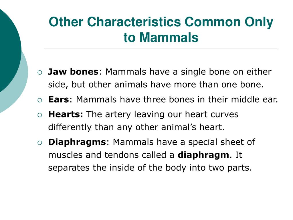 Other Characteristics Common Only to Mammals