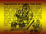 degradation of alcohol from body