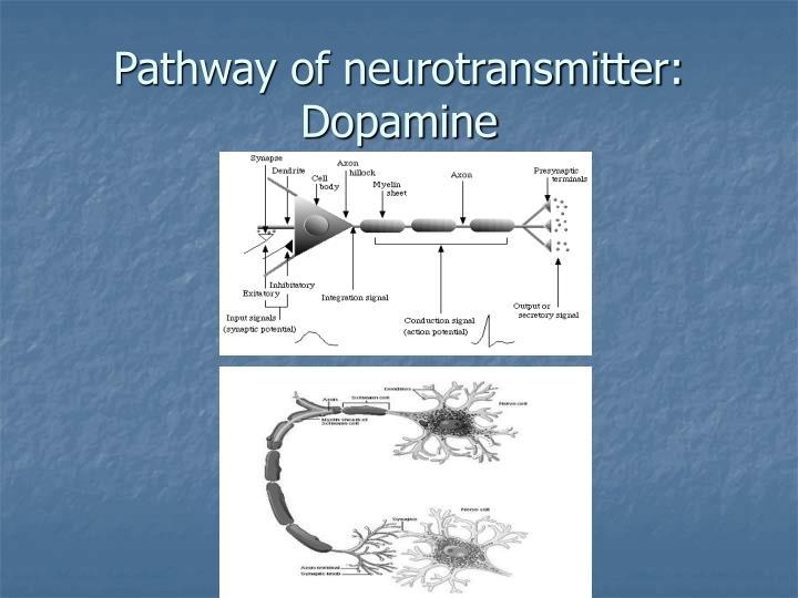 Pathway of neurotransmitter: Dopamine