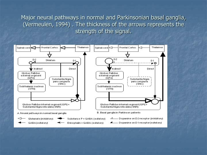 Major neural pathways in normal and Parkinsonian basal ganglia, (Vermeulen, 1994) . The thickness of the arrows represents the strength of the signal.