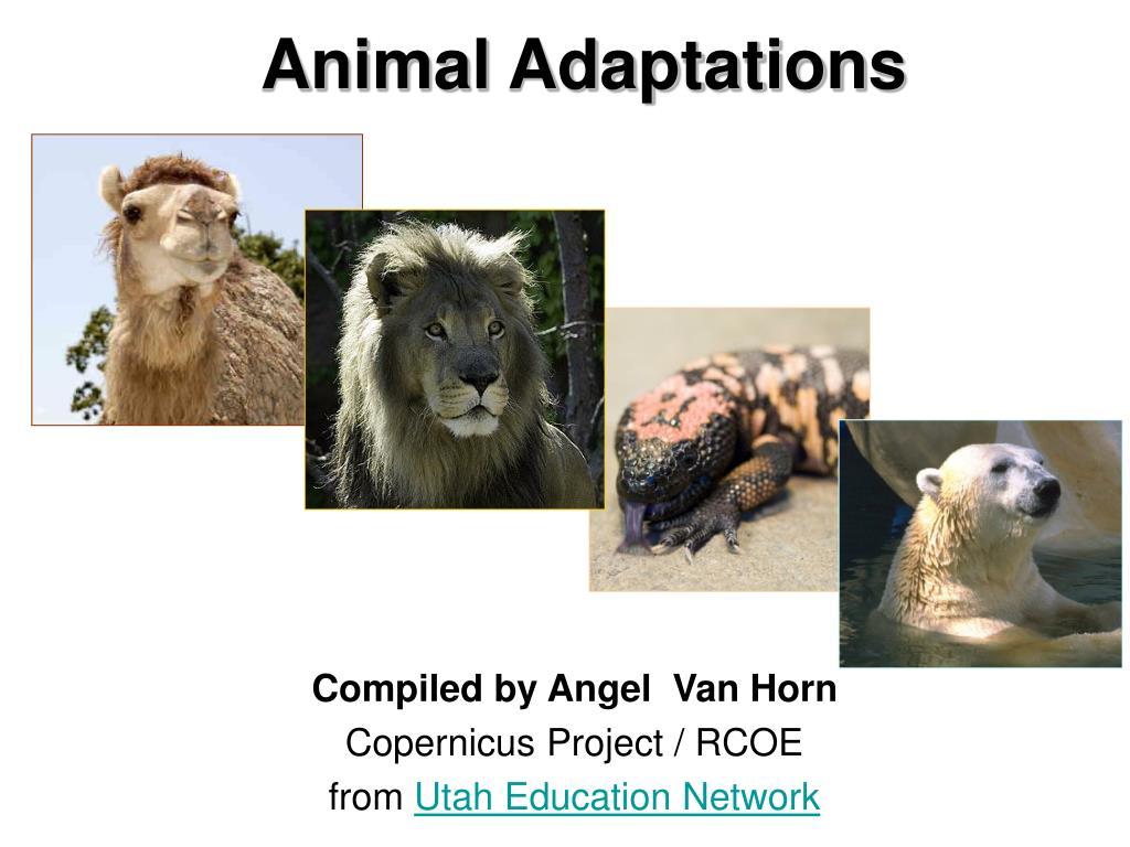 animal adaptations l.