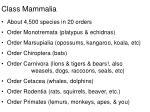 class mammalia14