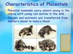 characteristics of placentals