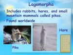lagomorpha