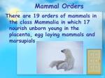 mammal orders