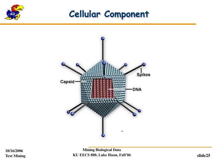 Cellular Component