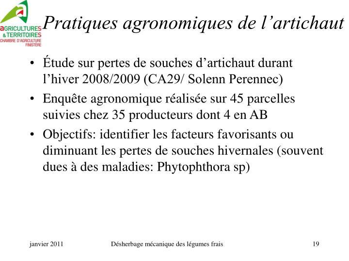 Pratiques agronomiques de l'artichaut