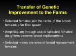 transfer of genetic improvement to the farms