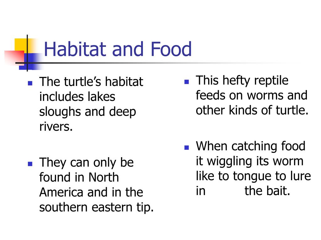 The turtle's habitat includes lakes sloughs and deep rivers.
