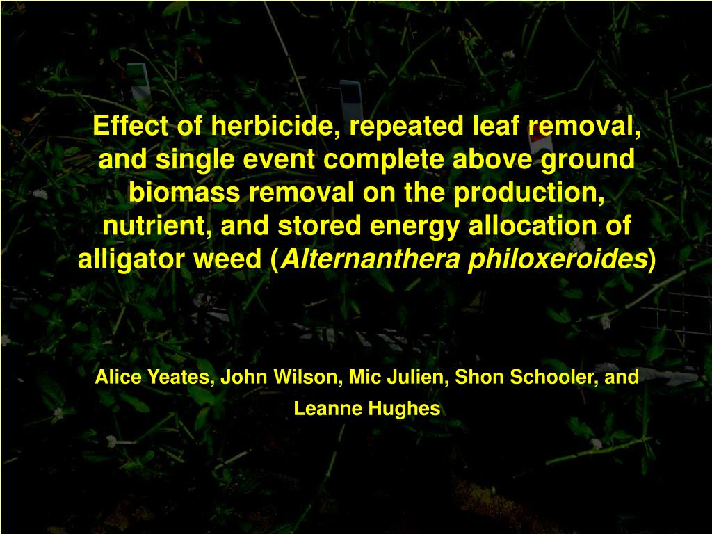Effect of herbicide, repeated leaf removal, and single event complete above ground biomass removal on the production, nutrient, and stored energy allocation of alligator weed (