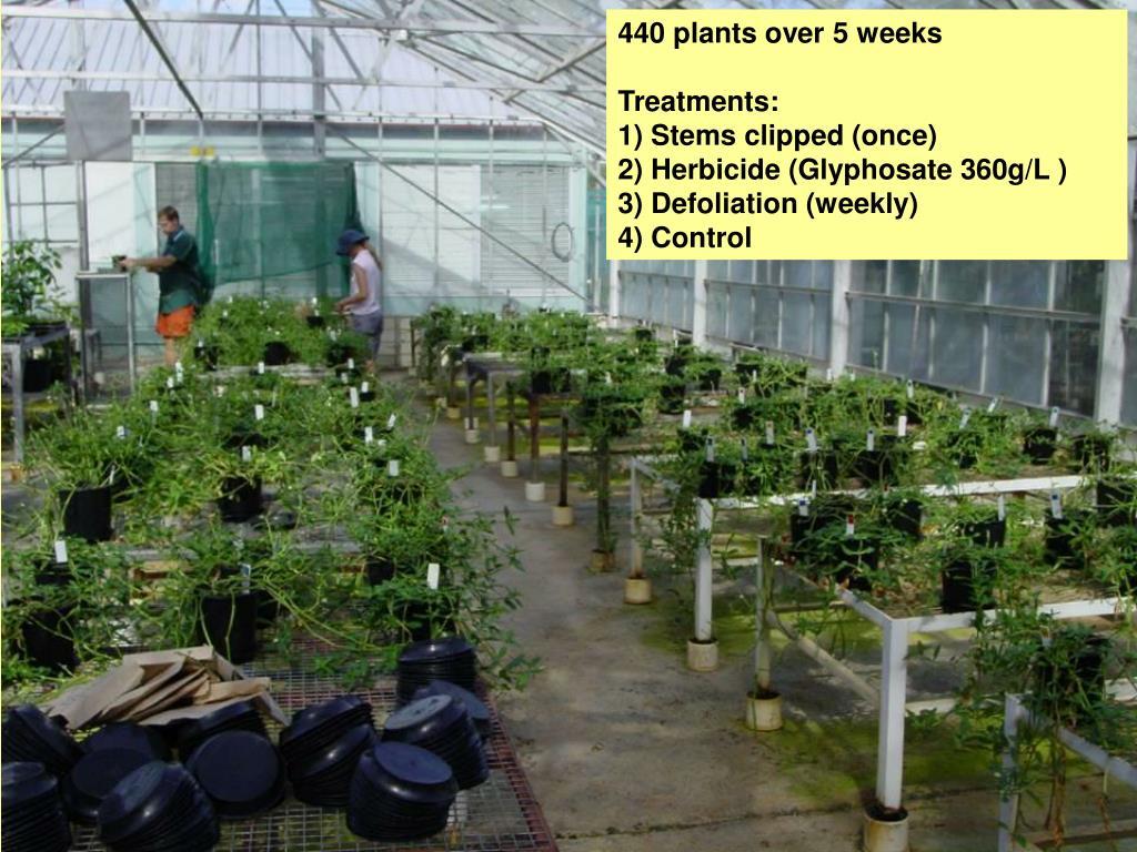 440 plants over 5 weeks