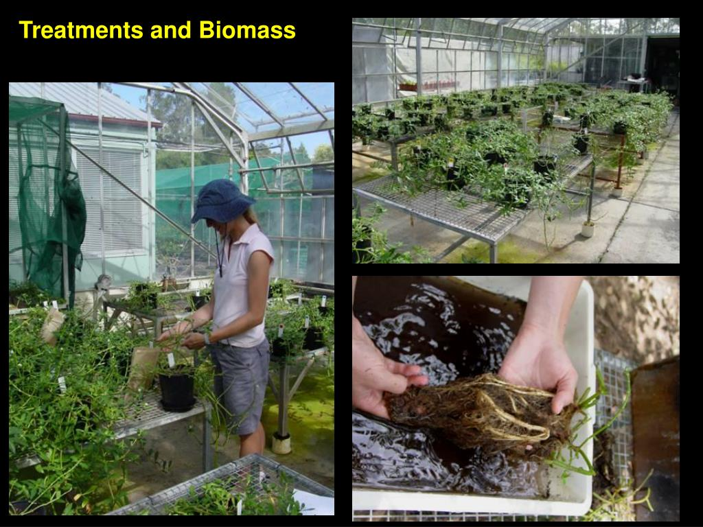 Treatments and Biomass