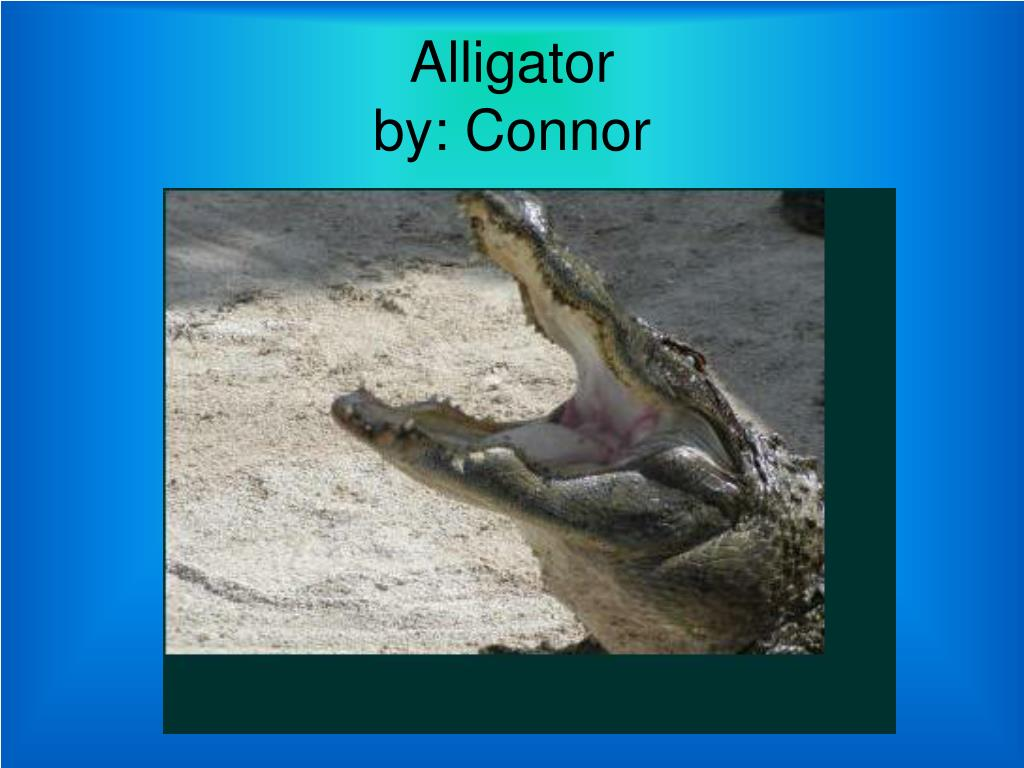 alligator by connor l.