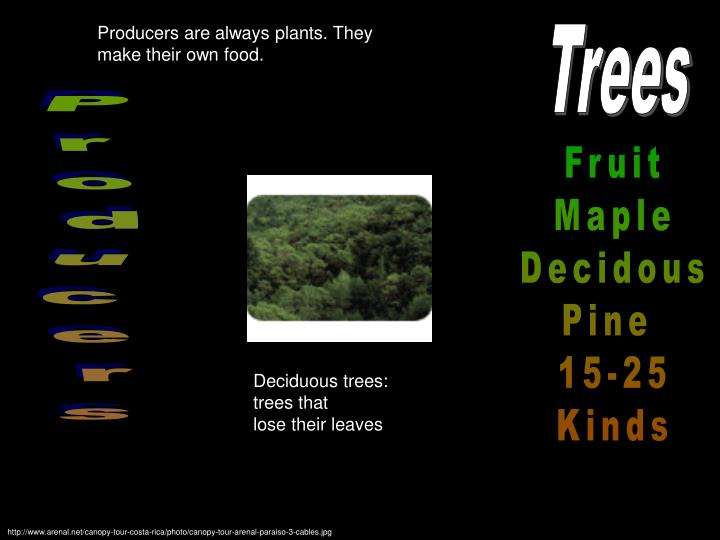 Producers are always plants. They make their own food.