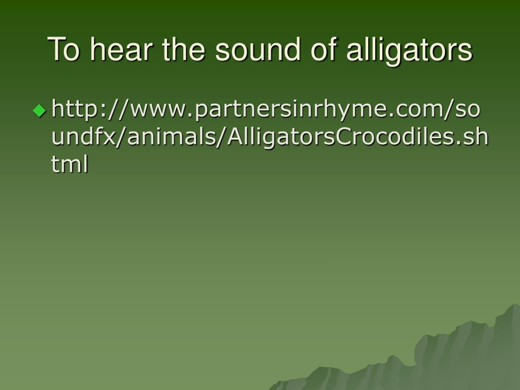 To hear the sound of alligators