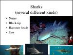 sharks several different kinds