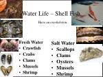water life shell fish