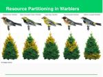 resource partitioning in warblers