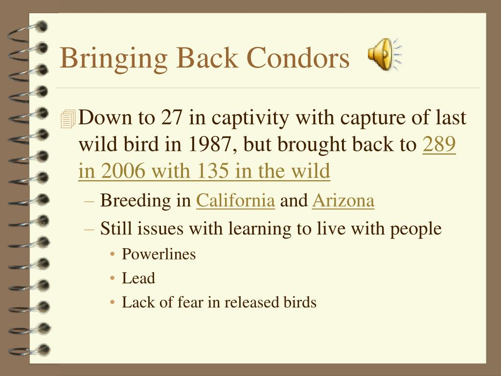 Bringing Back Condors