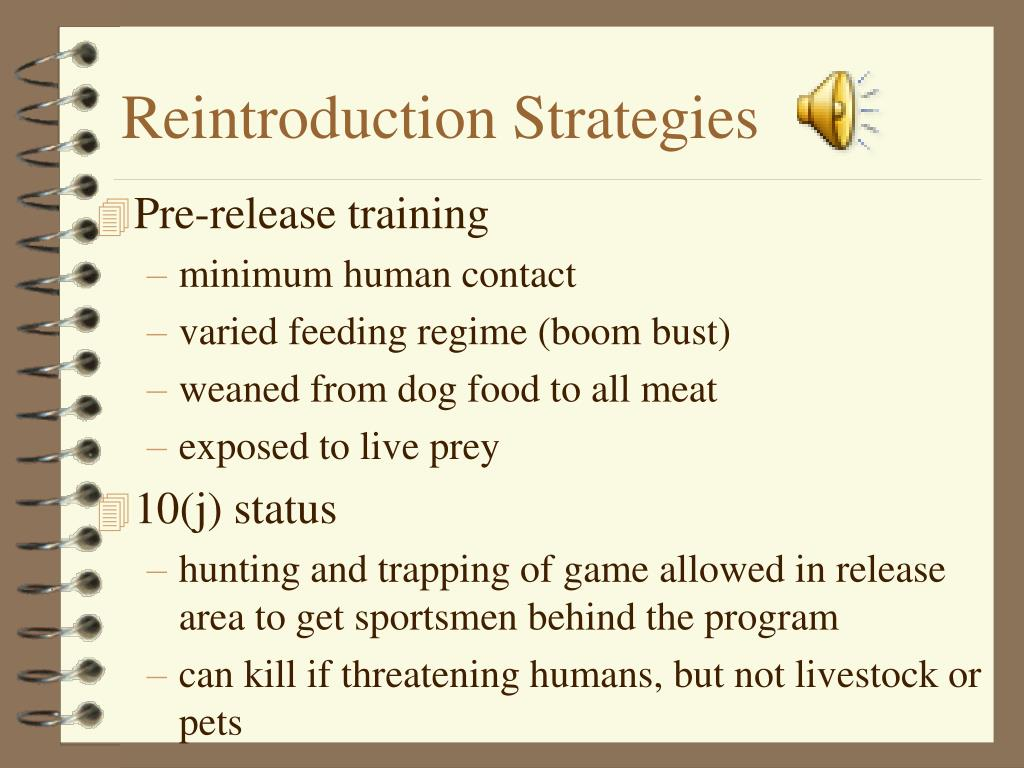 Reintroduction Strategies